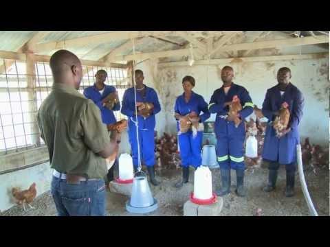 Making Knowledge Work - Zambia (EN)