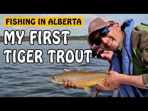 MY FIRST TIGER TROUT IN ALBERTA | Fishing With Rod