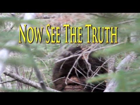 Tv show Films Bigfoot. Extraordinary Sasquatch video evidence