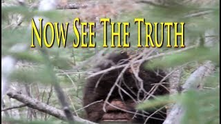 Tv show Films Bigfoot. Extraordinary Sasquatch video evidence