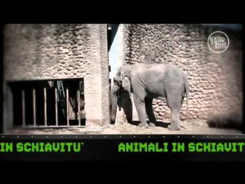 Bau Boys Pt. 39 – Dalla Torre: Animali in schiavitù