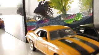 Toy Cars Parking Near The Fish Tank