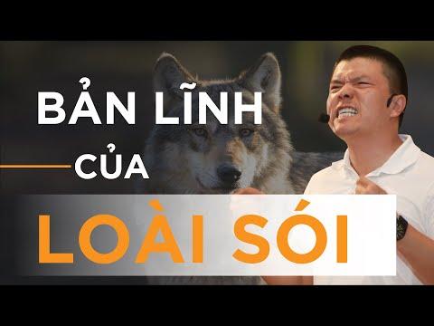 Bài học từ loài sói | Video truyền động lực hay nhất - Motivation