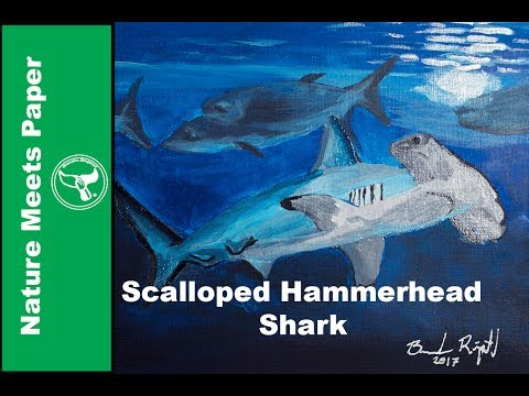 Scalloped Hammerhead Shark - 2:27 - Nature Meets Paper