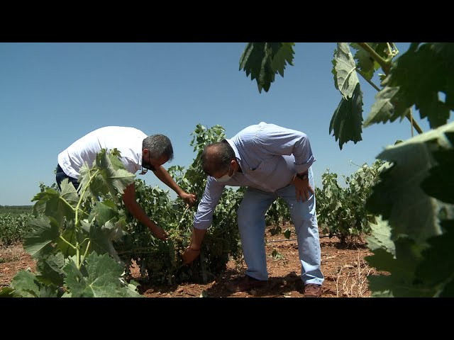 Agricultor sobre daños por tormenta: