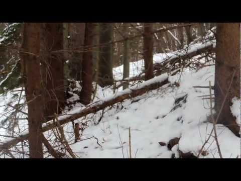 Spoločná poľovačka na diviaky Poľana (ulovenie môjho prvého diviaka)