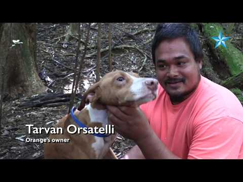 State Botanist Rescues Hunting Dog From 80-foot Hole In Kauai