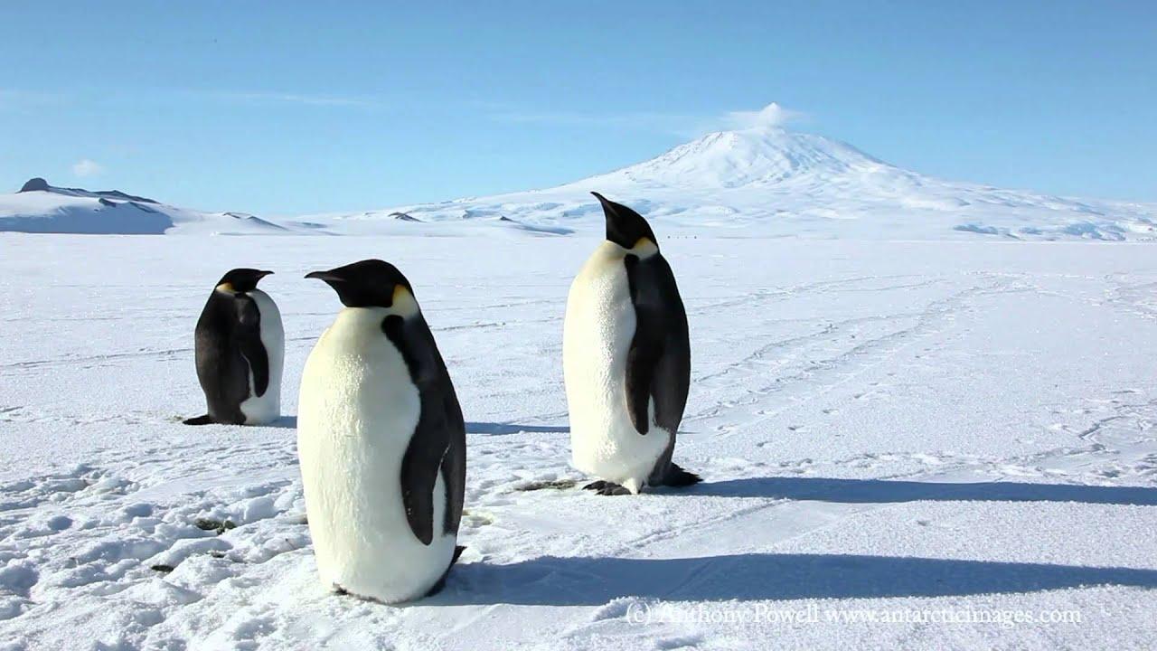 Emperor Penguins - YouTube