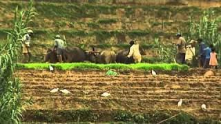 Trek au Sri Lanka avec Terres d'Aventure