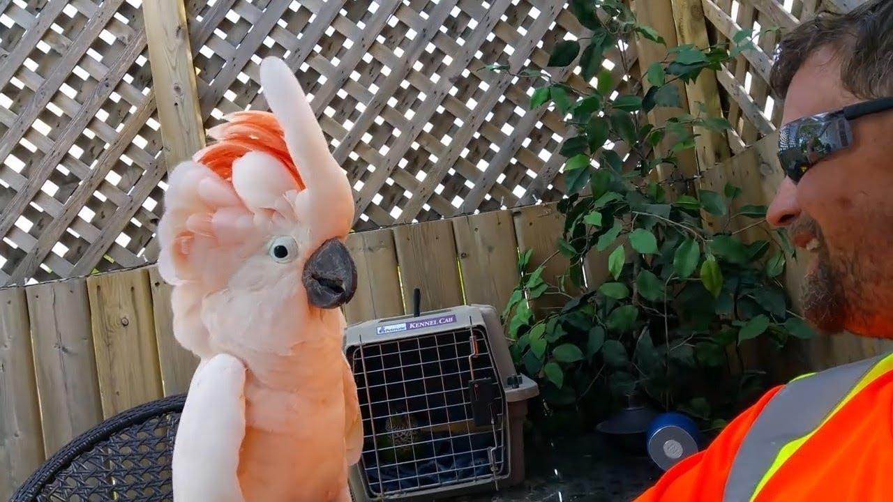 Смешные и талантливые попугаи