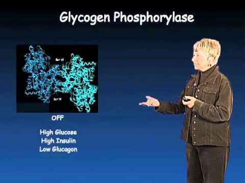 Susan Taylor (UCSD) Part 1: Protein Phosphorylation in Biology