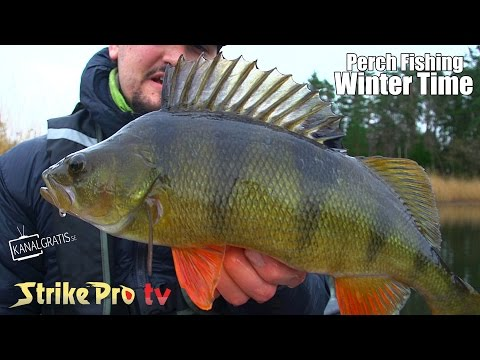 Strike Pro TV – Perch Fishing Wintertime
