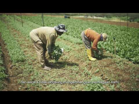 Vegetable farm - Kulai, Johor