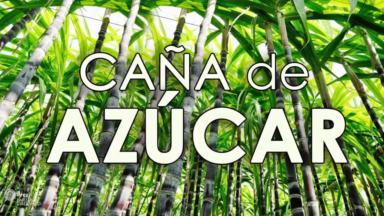 Circuito Productivo De La Caña De Azucar : Caña de azucar circuito productivo youtube