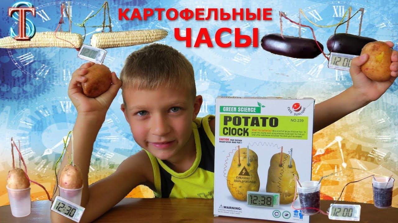Картофельные часы || Развивающие игрушки || Опыты для детей