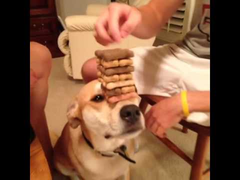 Vine – How To Play Jenga With Your Dog