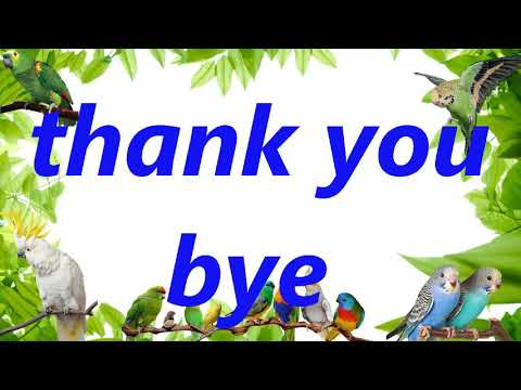 """thank you bye"" parrot , Cockatiel,  budgie, african grey, speed talking teach"