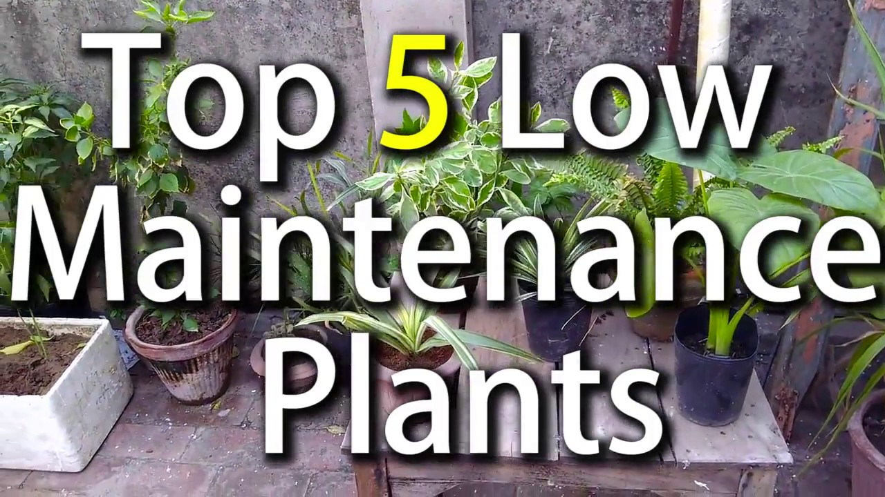 Top 5 low maintenance plants easy to maintain plants for Easy to maintain plants