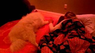 Sick Dog Hard To Say Goodbye Renal Failure American Eskimo