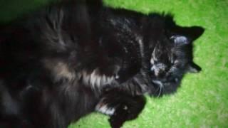 """""""Напал"""" после полуночи в темноте на спящую кошку и стал светить на неё фонариком"""