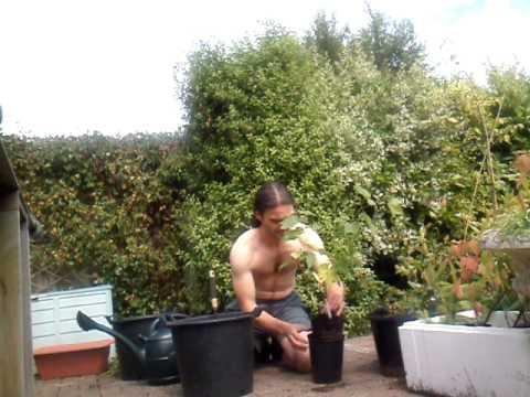 How To Grow In Pots