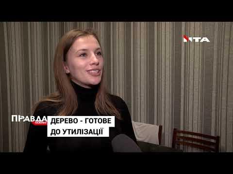 НТА - Незалежне телевізійне агентство: У Львові два дні працює 6 локацій для збору дерев на переробку: куди можна здати свою ялинку?
