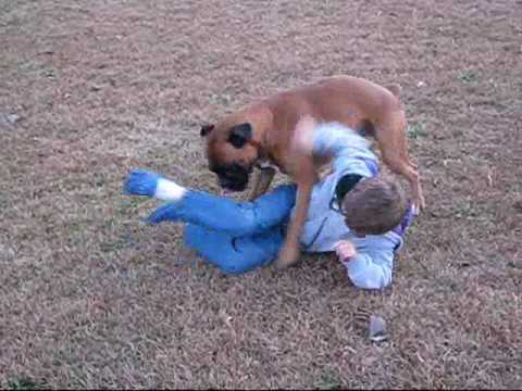 Dog Attacks Child Video