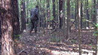 Hog Hunting in Alabama