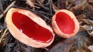 Какие грибы растут в марте в Смоленске. Путешествия лесным дорогам Смоленска.