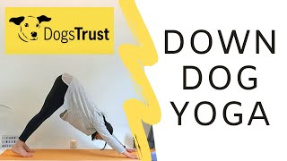 Down Dogs for Dogs Trust | Yoga Challenge | Yoga With Orlaith