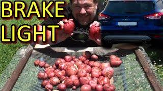 BRAKE LIGHT Potato Growing How to & Tips