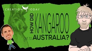 How did kangaroos get to Australia? - Creation Today Claims