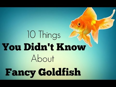 10 Facts You Didn't Know About Goldfish!
