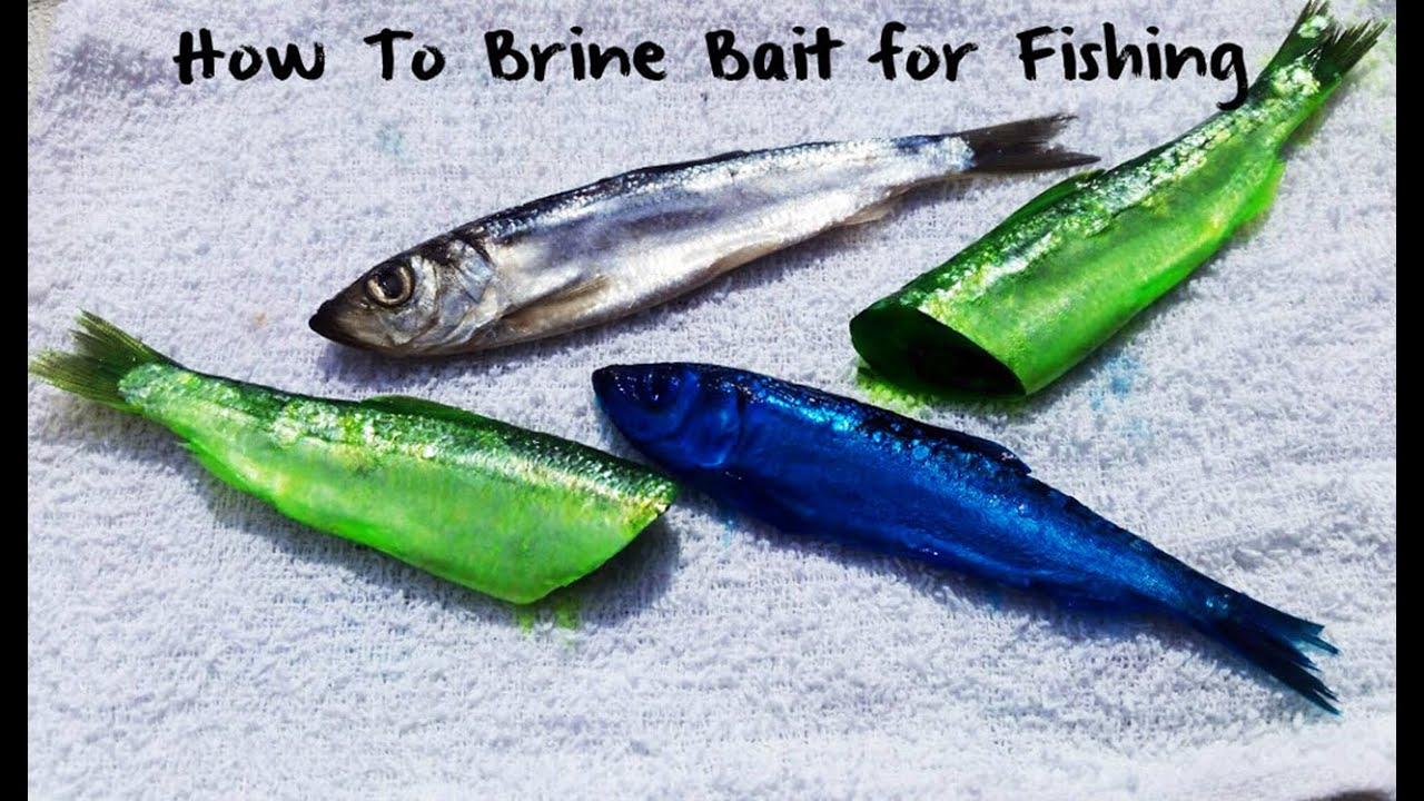 How To Brine Bait
