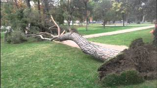 Sound tree falling - sound effect