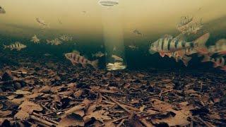 ОКУНИ СМОТРЯТ ТЕЛЕВИЗОР | Зимняя Рыбалка 2017(В качестве эксперимента опустил под лёд банку с живцом, а рядом подводную камеру. Было интересно увидеть..., 2017-03-09T06:43:34.000Z)