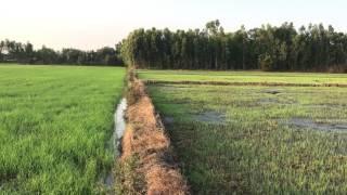 Thuyết Minh Cách Làm Lúa Đồng Bằng Sông Cửu Long