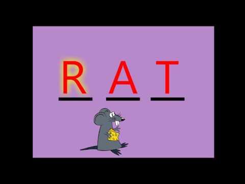 Spelling Words that sounds like CAT / BAT / RAT - ACTIVITY