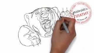 Как нарисовать свирепого дикого медведя поэтапно карандашом(Как нарисовать медведя поэтапно карандашом за короткий промежуток времени. Видео рассказывает о том, как..., 2014-07-10T14:08:13.000Z)