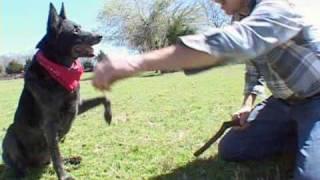 Repeat youtube video Skidboot the Amazing Dog