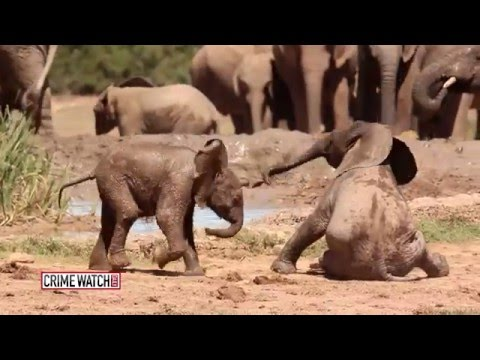 The Underground World of Wildlife Smuggling - Pt. 2 - Crime Watch Daily