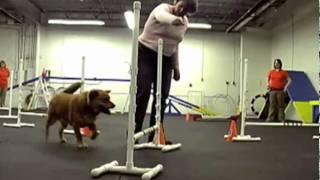 Family Dog Center Of Illinois - Crystal Lake, Il - Dog Agility Program