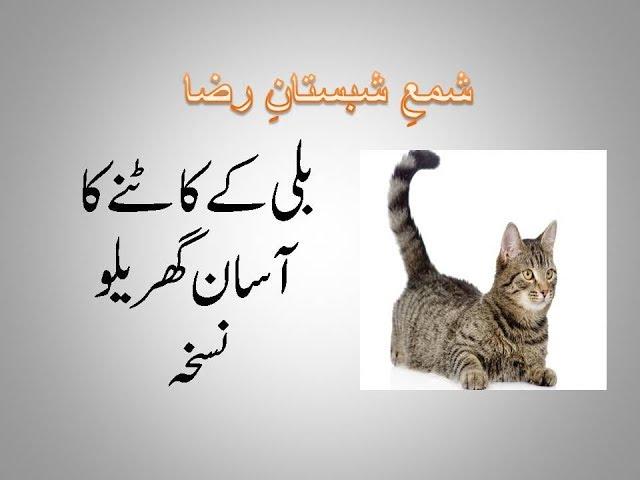 bili ke katne ka ilaj in urdu/ Home redemi for cat bite treatment