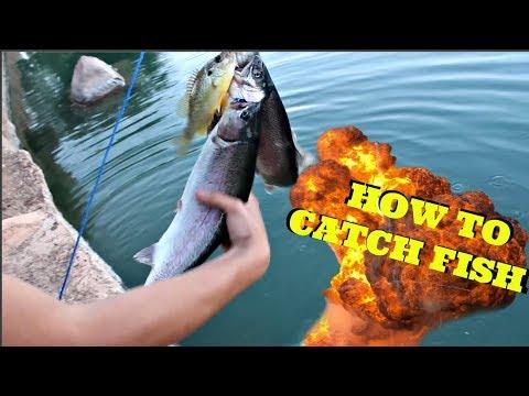 How to catch FISH! Sahuarita Lake Fishing Pt.2   Multi-Species Day Tucson