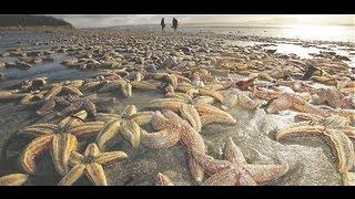 mystery 50 000 starfish beached dead in united kingdom ireland nov 15 2012
