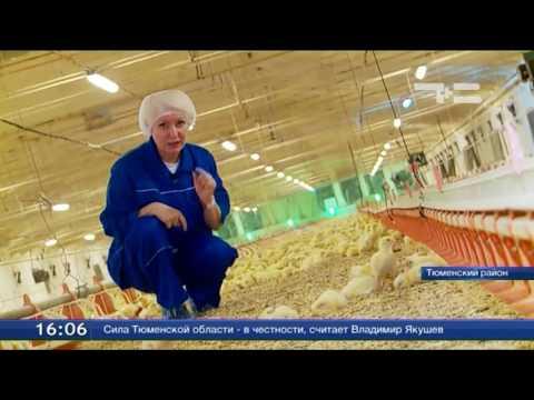Гульнара Алтынгузина со своей бригадой  за год выращивает до 4 миллионов кур