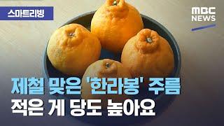 [스마트 리빙] 제철 맞은 '한라봉' 주름 적은 게 당도 높아요 (2021.03.04/뉴스투데이/MBC)