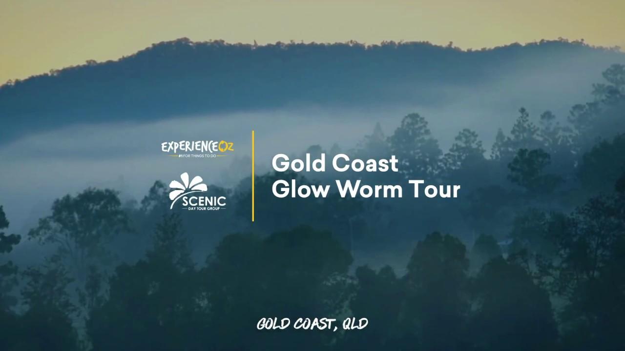 Scenic Hinterland Tours   Gold Coast Glow Worm Tour   Experience Oz ...