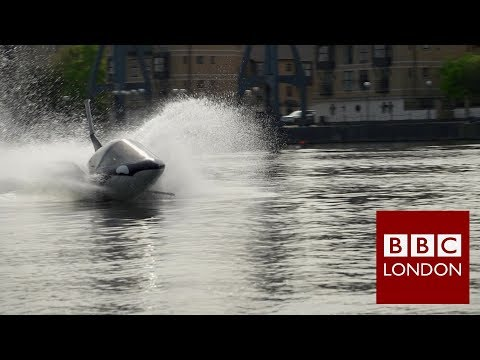 "The ""predator"" whale comes to London's River Thames - BBC London"