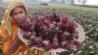 Farm Fresh Beetroot Laddu Recipe Sweet Beets Harvesting & Homemade Laddu Curry Organic Village Food